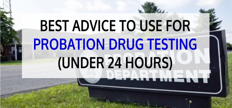 Best Advice to Use for Probation Drug Testing (Under 24 Hours)