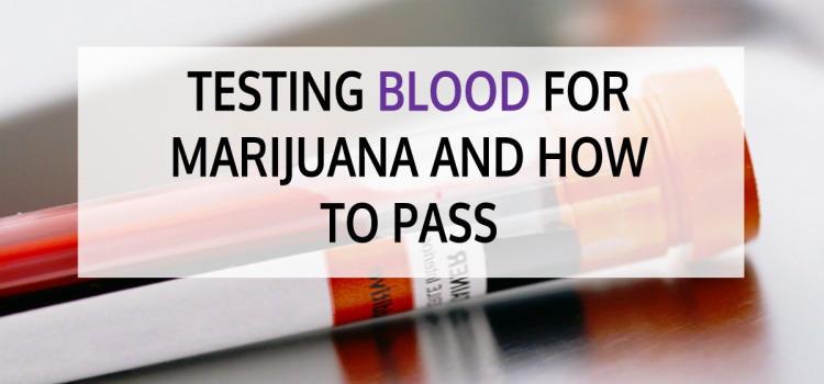 Testing Blood for Marijuana and How to Pass
